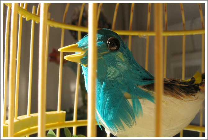 kitchvogel