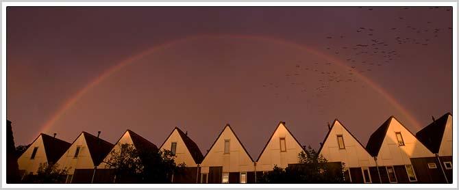 regenboogmetvogels