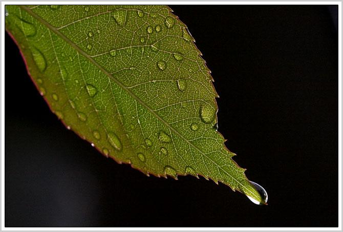 rozenblad2