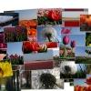 2005 22 April  bloembollen