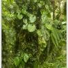 gatenplant