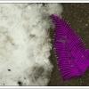 paarse veer